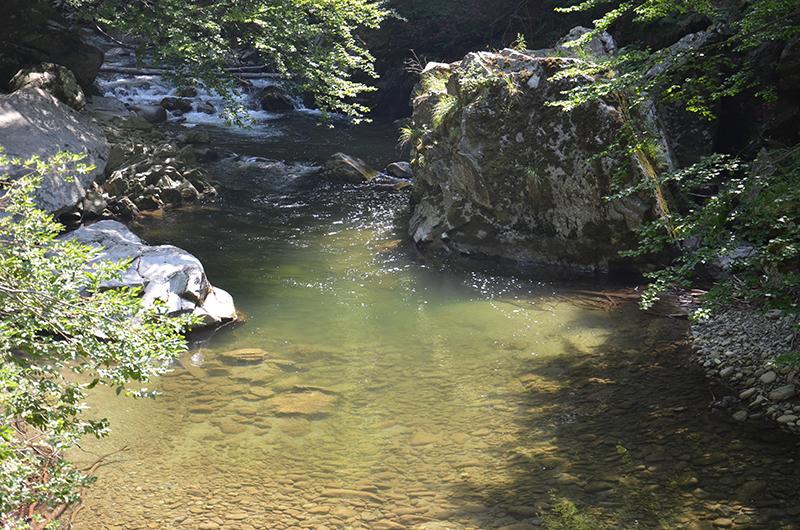 Albia raului Gilort