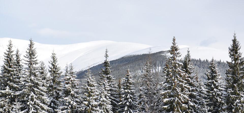 Muntele Plescuta